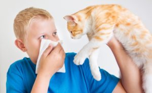 у мальчика аллергия на кошек