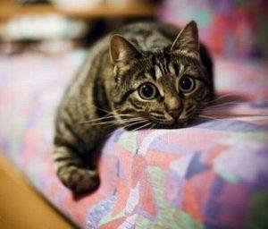 полосатая кошка лежит на диване