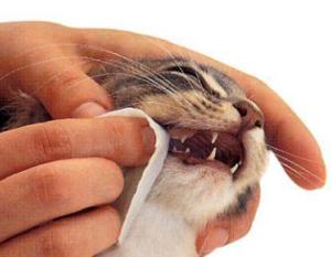 запах изо рта у кота причины