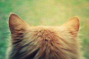 кошачьи ушки