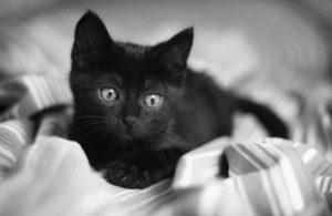 черный котенок на одеяле