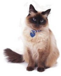ошейник для кошки с идентификатором