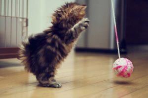 котенок играет с клубком