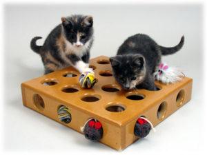 котята играют в игрушки