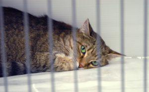 кошка тоскует в приюте