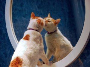 кошка нюхает зеркало