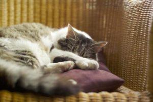кошка спит перед окотом
