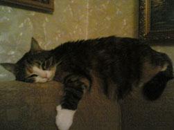 кот спит на спинке дивана