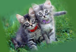 два котенка в ошейниках