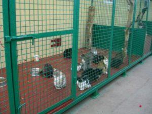 московский приют для кошек