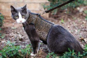 шлейка жакет для кошек