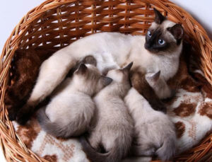 кошка с котятами в лежанке