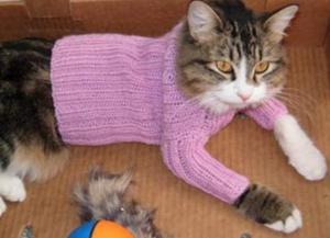 вязаный свитер для кота