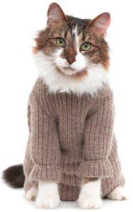 котик в вязаной кофточке