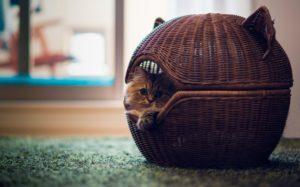 лежанка для кошки из корзины
