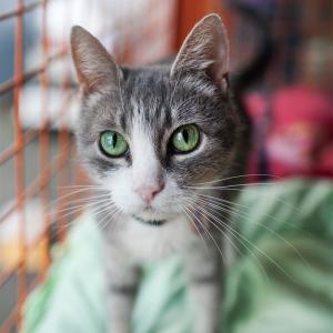 зеленоглазый кот в приюте