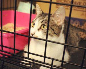кот в клетке в приюте