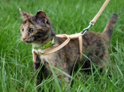 кошка в траве с поводком