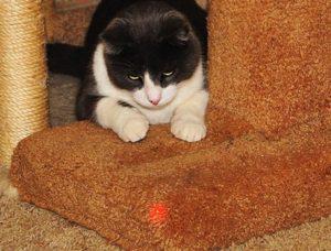 кот смотрит на лазер