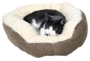 кошка лежит в лежанке