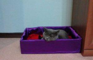 лежанка из коробки