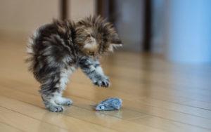 котенок играет с игрушкой мышкой