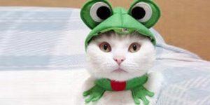 шапка лягушка для кошки