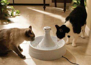 поилка фонтан для кошек