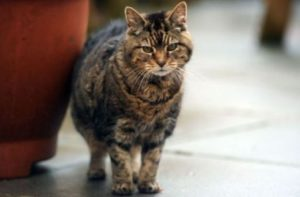 почтенный возраст у кошки