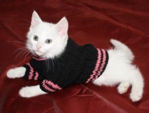 белый котенок в кофте